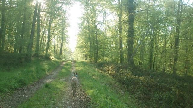 20150423-Fruehlingswald-Run-02