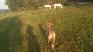 ... und seit gestern grasen die Pferde darauf.