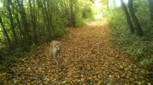 Herbstwald!