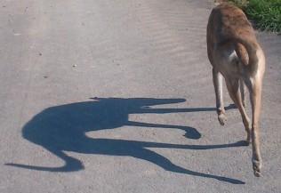 Perfekter Schatten ;-)))