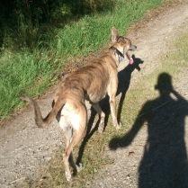 Running goes on - nach der Katzenjagd. Keine Angst, die Mieze ist wohlbehalten auf einen Baum gesprungen und hat Evita eine lange Nase von oben gemacht ;-)
