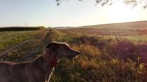 Stimmung am frühen Morgen auf dem Feld