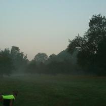 Heute Morgen bei erstem Bodennebel