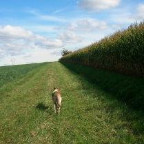 ... doch für mich ist das Pedalieren durch das holperige Gras ganz nett anstrengend und ich bin laaangsam ;-)