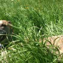 Und hinterher NOCHMAL ins feuchte Gras liegen!