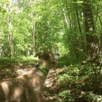 Evita hört ein Rascheln im Unterholz...