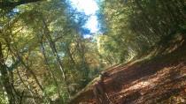 Herrlicher Herbstwald