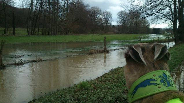 20180119-Running-Hochwasser_032