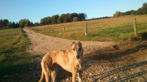 🐾💕🐾 Evita 🐾💕🐾 my Sweetheart in der goldenen Abendsonne