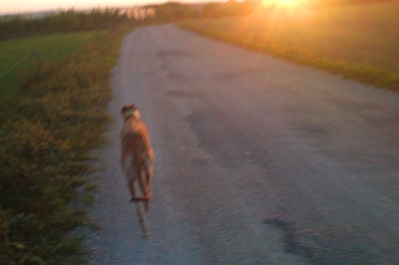 Evita läuft dem goldenen Sonnenball entgegen...