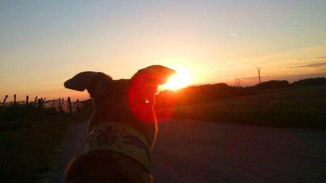 Noch ein letzter Blick in die Sonne.
