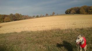 ... auf den Feldern!