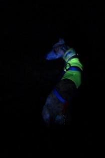 Bin wirklich erstaunt, denn ich kenne eigentlich nur die Stirnlampen zum Running. Dieses Bild ist OHNE Blitz, nur mit dem Schein des neuen Nacht-Lichtes entstanden!