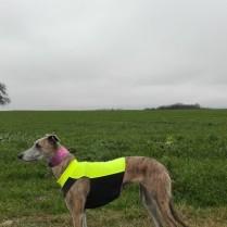 20181231-Sylvester-Dog-Walk-011