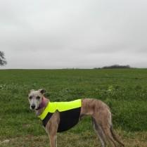 20181231-Sylvester-Dog-Walk-012