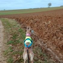 20181231-Sylvester-Dog-Walk-022