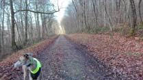 Auch durch den Wald verläuft der Weg, also der ehemalige Schienenverkehr schnurgerade.