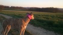 20190330-Running-enjoyin_sunset1