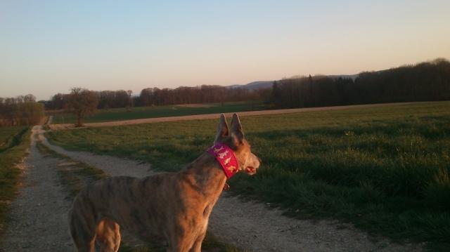 20190330-Running-enjoyin_sunset3