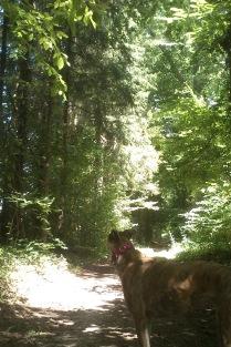 DogWalk through the forest
