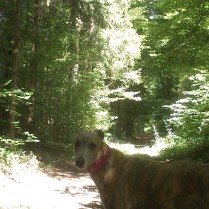 DogWalk through the forest