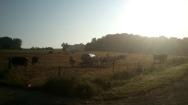 Die Kühe sind auch schon wach!