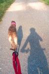 Schönes Schattenbild von uns beiden 🐾 🚴 🐾
