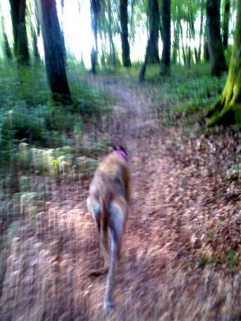 20190831-Running-Forrest_Impressions-05