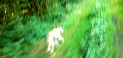 20190831-Running-Forrest_Impressions-06