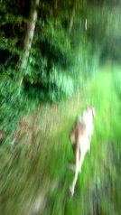 20190831-Running-Forrest_Impressions-07