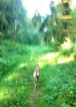 20190831-Running-Forrest_Impressions-09