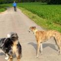 Aber dann kommt Jean-Marie mit seinem Australien Shepherd des Weges...