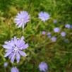 20200721-Running-31-Flowers